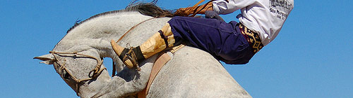 horse sit